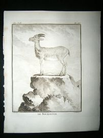 Buffon: C1770 Ibex, Antique Engraving